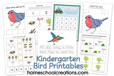 The 21 Best Images About Birds Preschool Crafts - 6 best images of preschool printables bird parts bird