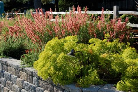 garden color schemes plant a palette in your yard
