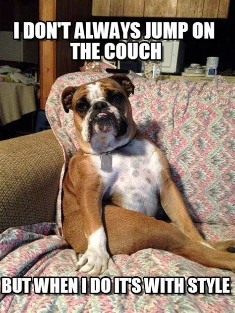 Bulldog Meme - english bulldog meme google search funny dogz catz