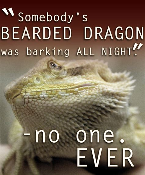 Bearded Dragon Meme - 2 new beardie memes bearded dragon org