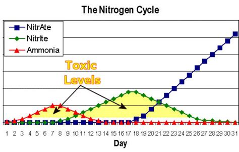 Do I Need To Cycle Tank If I Detox It by Tank Cycling Basics Biological Filtration Nano