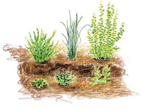 Cultiver Des Plantes Aromatiques by Les Plantes Aromatiques 2 Conserver Et Cuisiner