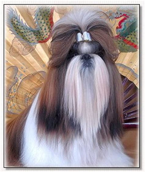 soho shih tzu bows by doggie bow ties specialty satins show bows