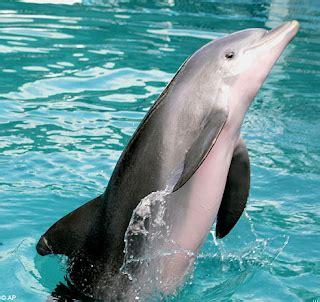 tutorial gambar lumba lumba anak mamuju blog membuat efek 3 dimensi pada objek