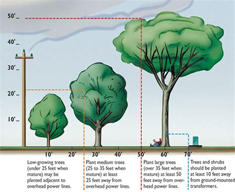 tree to plant tree planting pruning