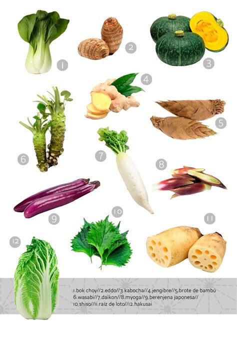 vegetables in japanese japanese vegetables food infographics