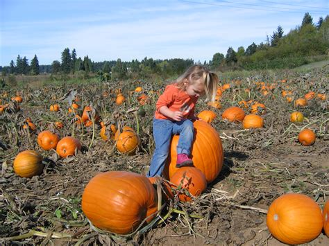 pumpkin patches 301 moved permanently