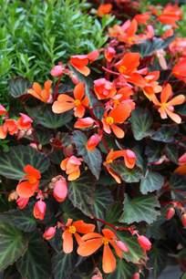 Flowers In Amarillo - plantas de sombra 9 opciones para el jard 237 n