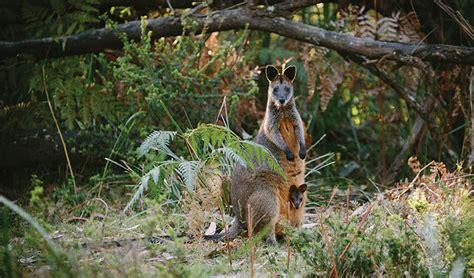 australian plants  animals nsw national parks