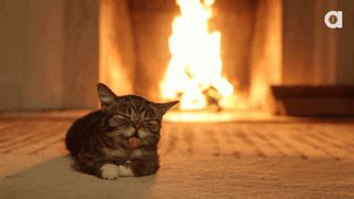 Fireplace Meme - cat enjoying a fireplace gifs