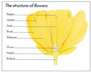 garden flowers names plants in nanopics