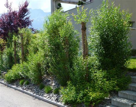 sichtschutz terrasse pflanzen garten pflanzen sichtschutz die besten sichtschutz
