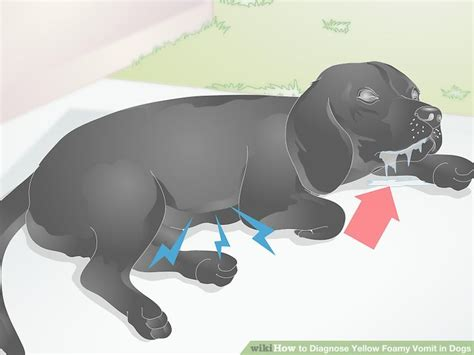 puking yellow foam how to diagnose yellow foamy vomit in dogs 6 steps