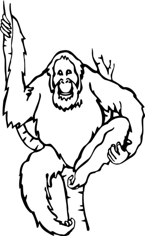 free coloring pages of baby orangutan