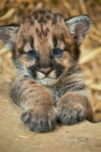 baby wild animals related keywords amp suggestions baby