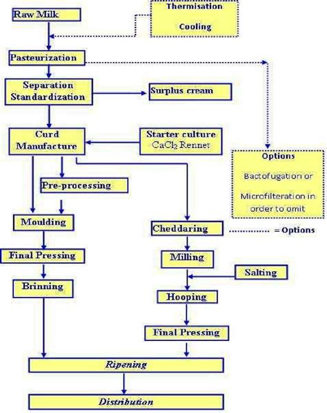 cottage cheese production cheese production flow diagram adopted from dairy