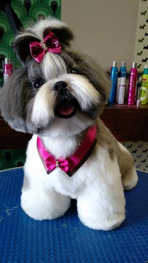 what does a shih tzu haircut look like 54 best images about shih tzu grooming hairstyles on