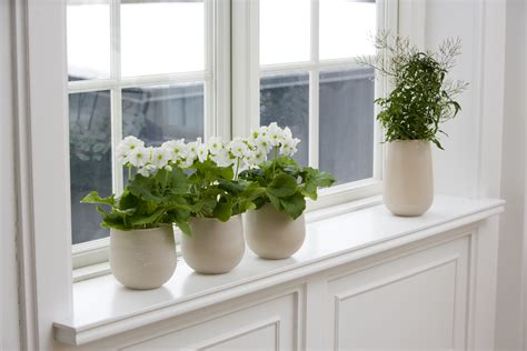 Window Ceil by Floradania Marketing What Does Your Window Sill Signal