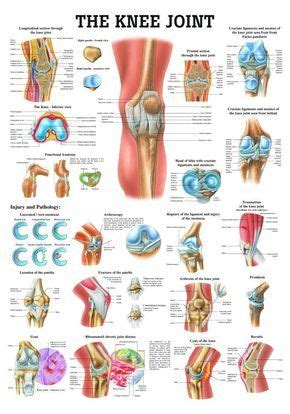 at home relief for knee with pictures ehow best 25 human joints ideas on shoulder joint