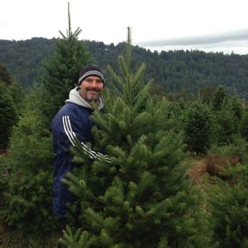 summit christmas tree farm los gatos ca united states