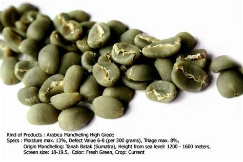 Arabica Mandheling Bijibubuk arabica mandheling grade 1 products indonesia arabica mandheling grade 1 supplier