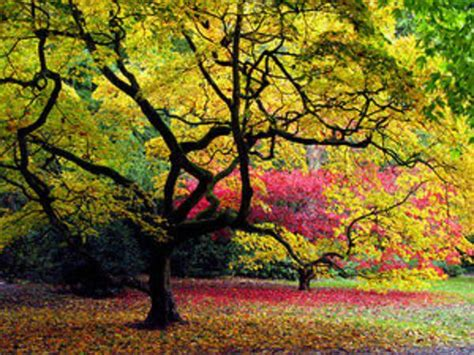 pretty trees pretty trees by caligirl89 on deviantart