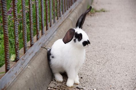 How To Get Rid Of Rabbits Shed by 3 5 Methods To Get Rid Of Rabbits Quickly And Effectively