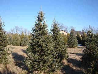 evergreen acres christmas tree farm llc
