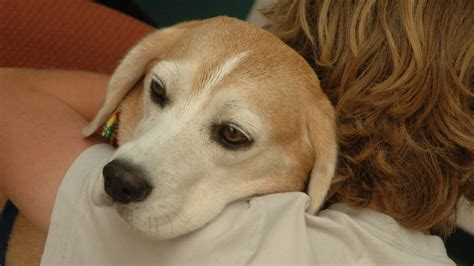 fanconi dogs imported treats are poisoning dogs great lakes advocate