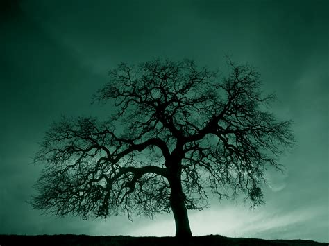 white and green tree black and white tree hill wallpaper the goodbye