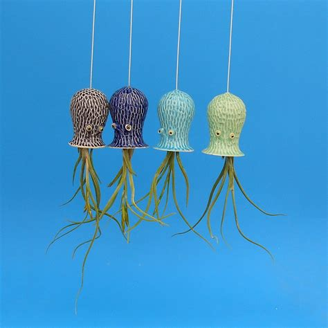 air plant wall holder 100 air plant wall holder give a plant a home set