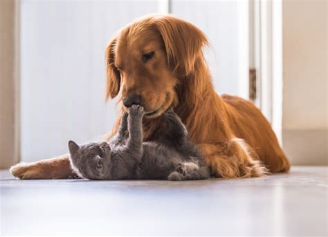 how to introduce cats and dogs dogs and cats the best ways to introduce them petmd
