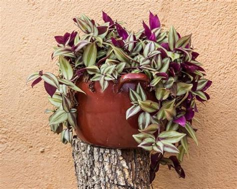 easy houseplants 19 easiest houseplants you can grow without care balcony