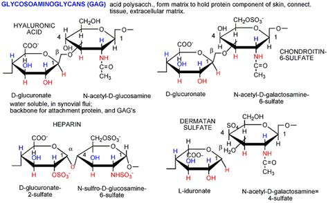 carbohydrates which one of the following characteristics polysaccharides what are polysaccharides and its classify