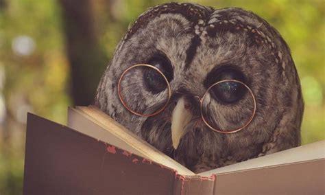 curiosidades sobre  corujas portal dos animais