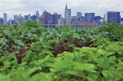 city farming a how to guide to growing crops and raising livestock in spaces books the future of gardening home garden