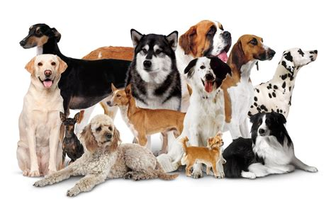 different puppies domestic dogs different types of dogs dk find out
