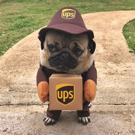 pug of the day ten pics of doug the pug that will make your day much better cus