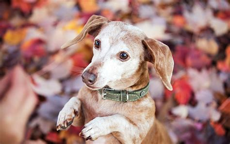 what age is a a senior it s adopt a senior pet month proof that age is just a number for these