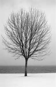 bare tree all alone photograph by greg wilson