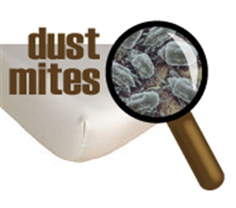 7 Ways To Get Rid Of Dust Mites by How To Get Rid Of Dust Mites In An Affordable Way