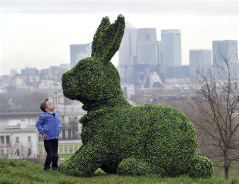 rabbit topiary rabbit hops into the times and guardian for easter