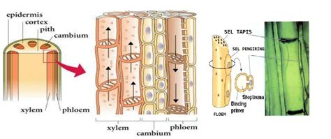 Biologi Sel Edisi 7 biologi gonzaga test jaringan tumbuhan