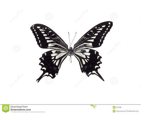 imagenes de mariposas en negro mariposa blanco y negro im 225 genes de archivo libres de