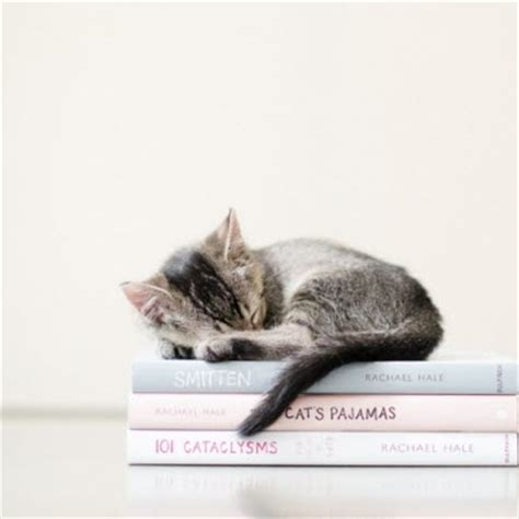 cats and books kitten