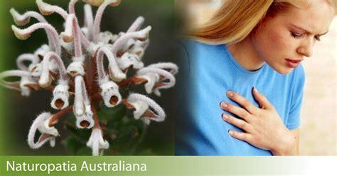 fiori australiani per ansia attacchi di panico i fiori australiani per ritrovare l
