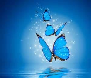 bello fondo de mariposas con una mensaje de reflexin para fondos de pantalla gratis de mariposas imagenes de mariposas