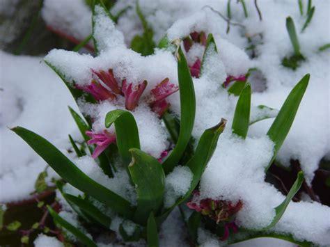fiori in inverno 10 marzo 2010 su riflessi di luce
