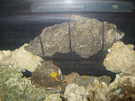 Aquascaping With Rocks by Aquascaping Rocks Aquarium Images