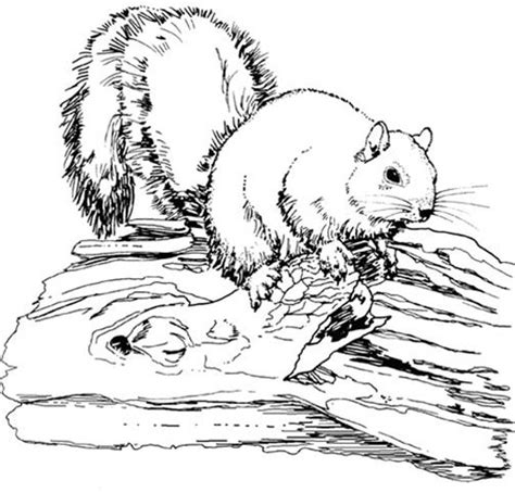 free coloring pages animals realistic squirrel color page
